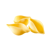 coquille-